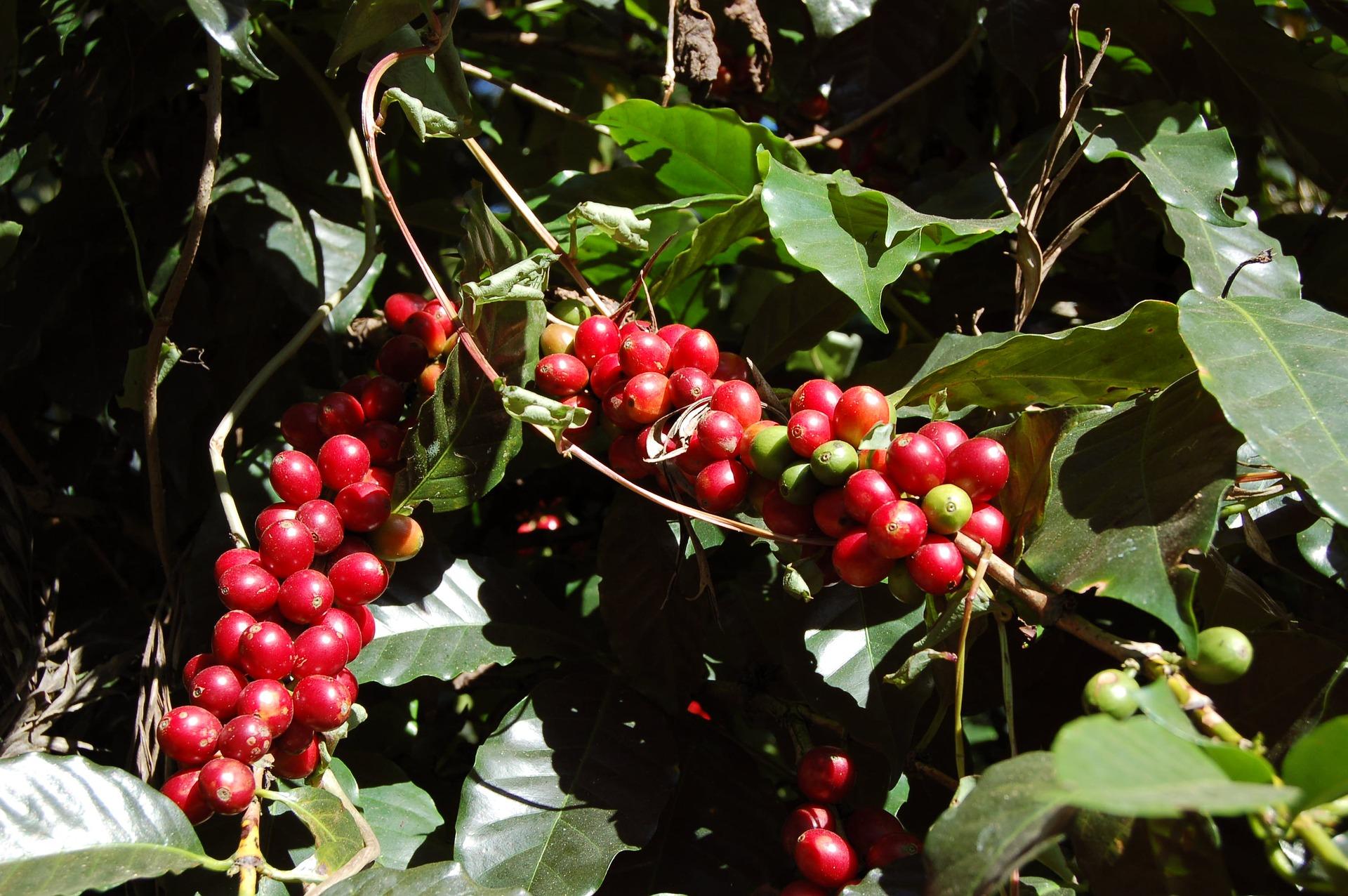 coffee-1786666_1920-1