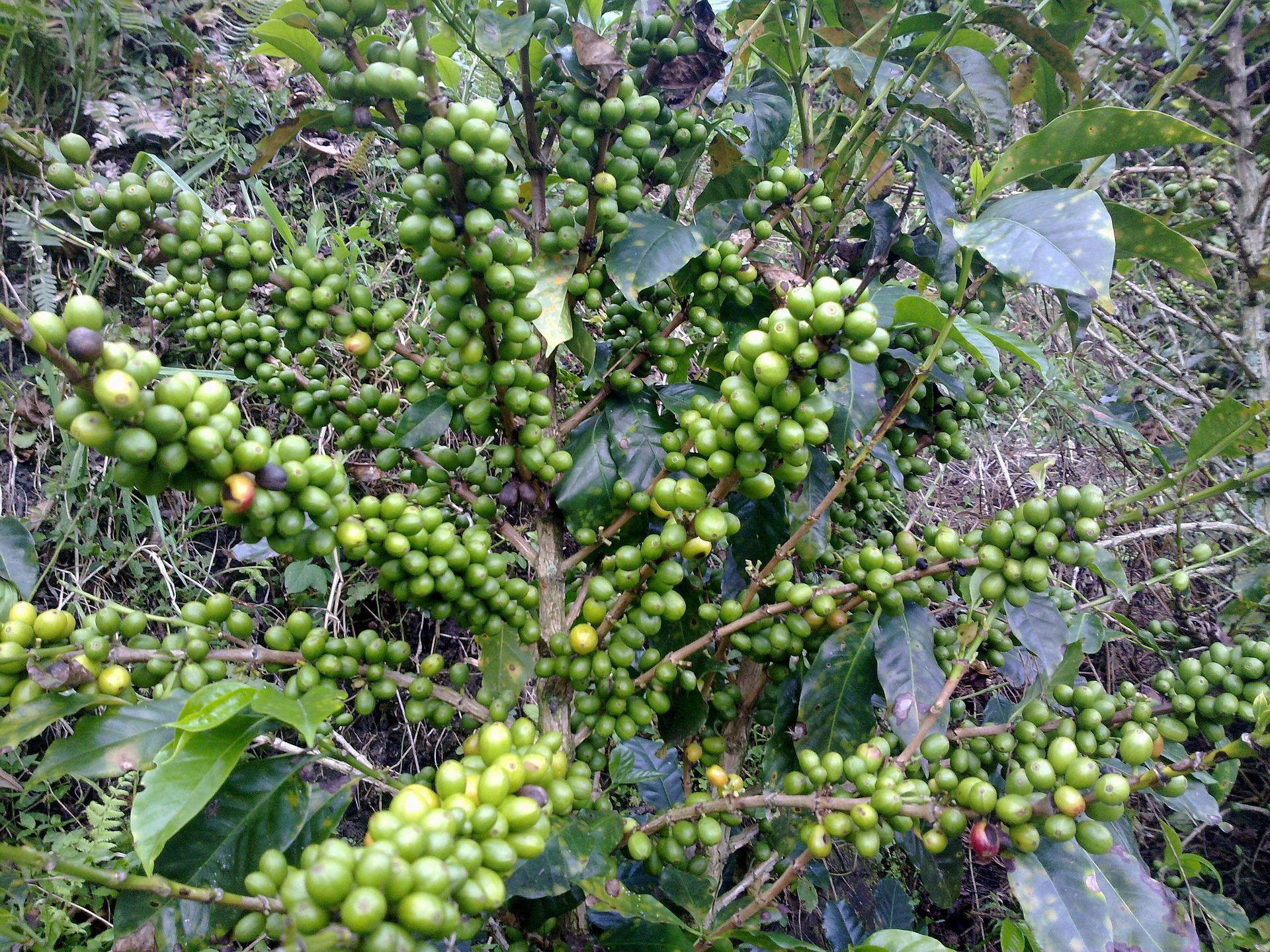coffee-988523_1920-1