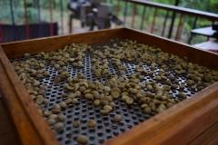 coffee-1129603_1920-1