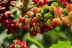 coffee-1474601_1920-1