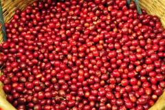 coffee-2083709_1920-1