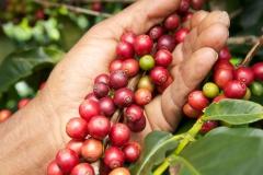 coffee-215383_1920-1