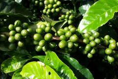 coffee-662737_1920-1